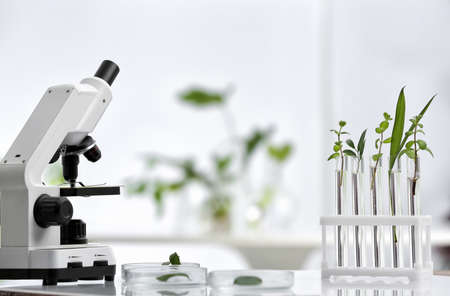 Laboratory glassware with different plants and microscope on table against blurred background. Chemistry research 版權商用圖片