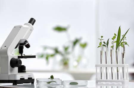 Laborglaswaren mit verschiedenen Pflanzen und Mikroskop auf dem Tisch vor unscharfem Hintergrund. Chemieforschung