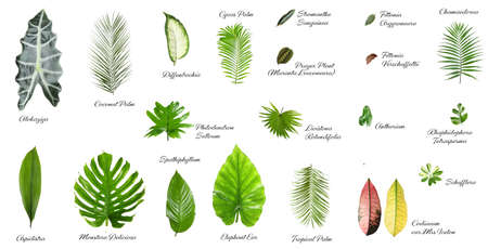 Set of different tropical leaves on white background Banque d'images