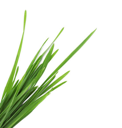 Wheat grass on white background, top view Stockfoto