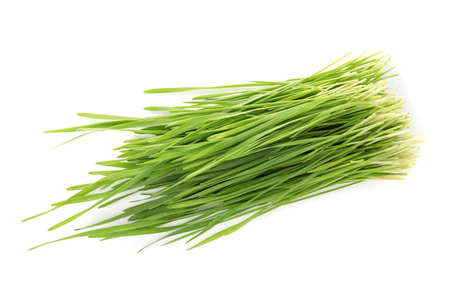 Wheat grass on white background, top view Stock Photo