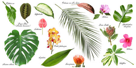 Set of beautiful tropical leaves and flowers on white background Standard-Bild