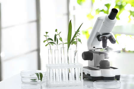 Laboratory glassware with different plants and microscope on table against blurred background. Chemistry research Reklamní fotografie