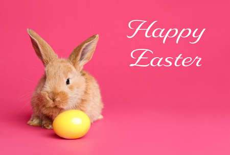 Adorable furry bunny and dyed egg on color background. Happy Easter Stock Photo