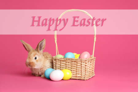 Adorable furry bunny near wicker basket with dyed eggs and text Happy Easter on color background