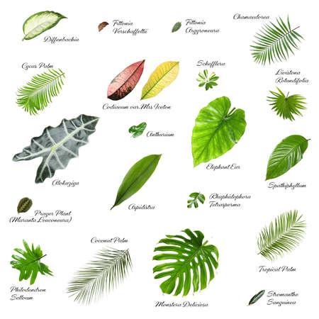 Satz verschiedene tropische Blätter auf weißem Hintergrund