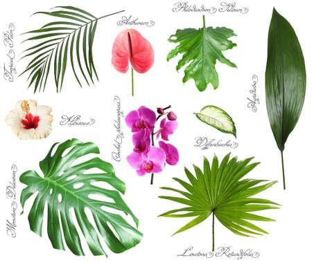 Satz schöne tropische Blätter und Blumen auf weißem Hintergrund