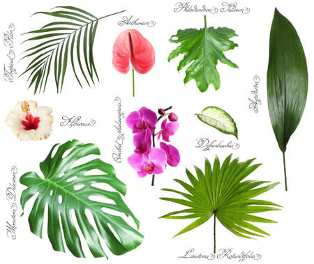 Set of beautiful tropical leaves and flowers on white background Stok Fotoğraf