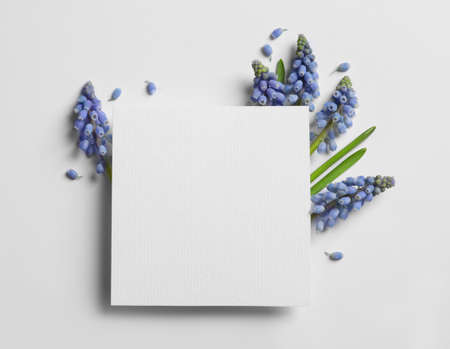 Empty card and spring muscari flowers on white background, top view. Space for text