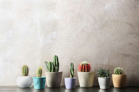 Different potted cacti on table near color background, space for text. Interior decor