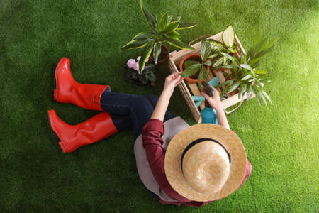 Woman taking care of seedling on green grass, top view. Home gardening Stock Photo