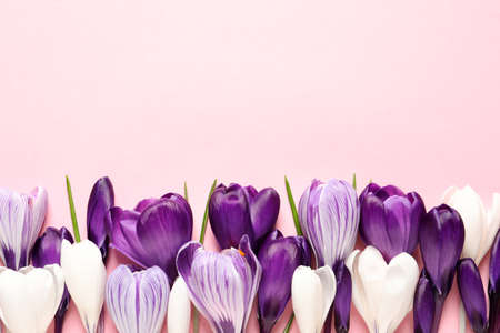 Flat lay composition with spring crocus flowers on color background, space for text