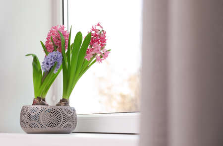 Blooming spring hyacinth flowers on windowsill at home, space for text Banque d'images