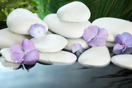 Zen stones and beautiful exotic flowers in water