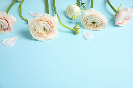 Ranunculus flowers on color background, space for text Archivio Fotografico