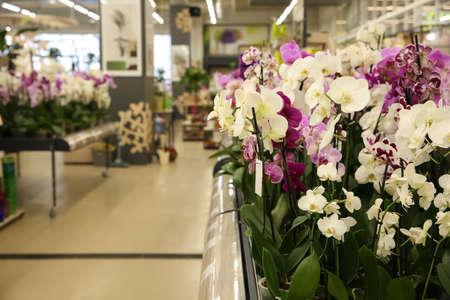 Assortment of beautiful orchid flowers at floral shop 免版税图像
