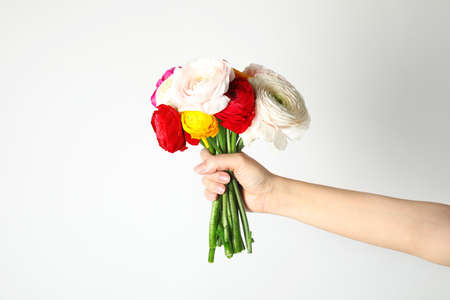 Woman holding bouquet with beautiful ranunculus flowers on white background Stock Photo
