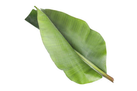 Fresh green banana leaf on white background. Tropical foliage Stok Fotoğraf - 120495175