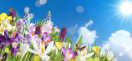 Beautiful spring flowers and flying butterflies against blue sky, space for text