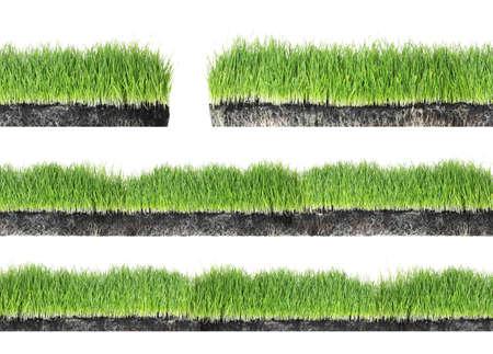 Set di erba verde fresca su sfondo bianco Archivio Fotografico
