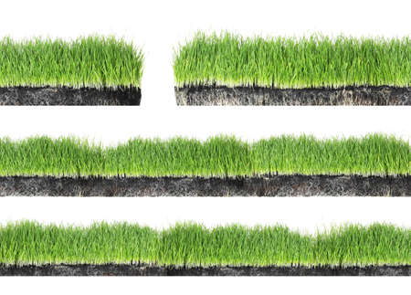 Set van vers groen gras op witte achtergrond Stockfoto