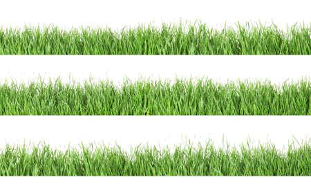 Set of fresh green grass on white background Stock Photo