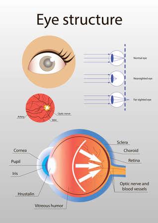 Illustration of detailed internal anatomical eye structure 版權商用圖片
