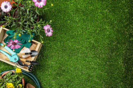 Flat lay composition with gardening equipment and flowers on green grass, space for text Banque d'images