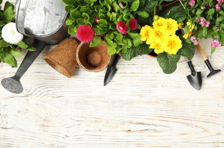 Flat lay composition with gardening equipment and flowers on wooden background, space for text Stockfoto