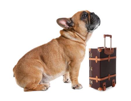 Adorable petit chien touristique et valise sur fond blanc