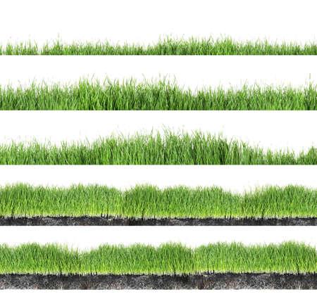 Conjunto de hierba verde fresca sobre fondo blanco.
