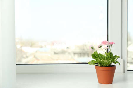 Beautiful blooming daisies in pot on window sill, space for text. Spring flowers Stok Fotoğraf