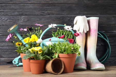 Blooming flowers in pots and gardening equipment on table Stock Photo
