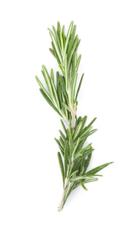 Świeża zielona gałązka rozmarynu na białym tle, widok z góry