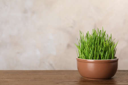 Bowl with wheat grass on table against color background. Space for text