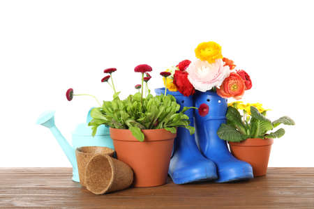 Potted blooming flowers and gardening equipment on wooden table against white background