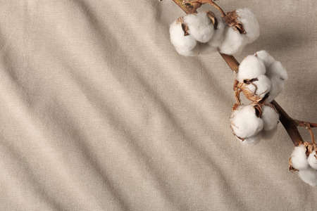 Branch with cotton flowers on fabric, view from above. Space for text Standard-Bild - 121988024
