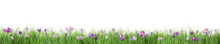 Beautiful blooming spring flowers on white background
