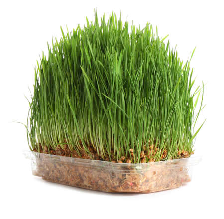 Fresh green wheat grass in container on white background Reklamní fotografie