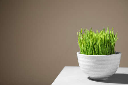 Bowl with fresh wheat grass on table against color background, space for text Reklamní fotografie