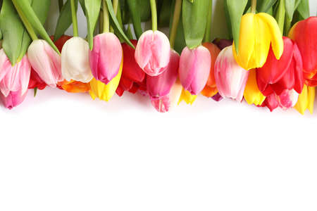 Beautiful bright tulips on white background, top view. Spring flowers Stock Photo