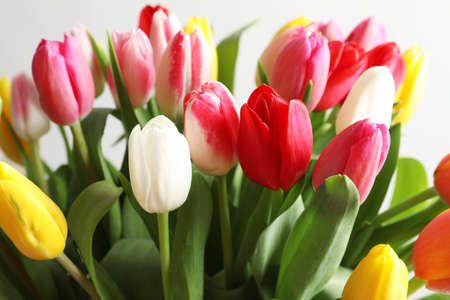 Beautiful bouquet of bright tulip flowers on light background, closeup