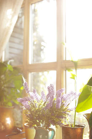 Beautiful view of sunlit houseplants on window sill