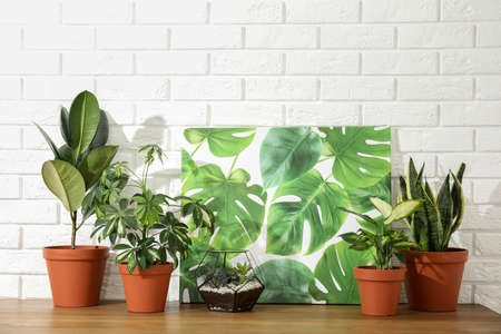 Potted home plants and picture on table against brick wall