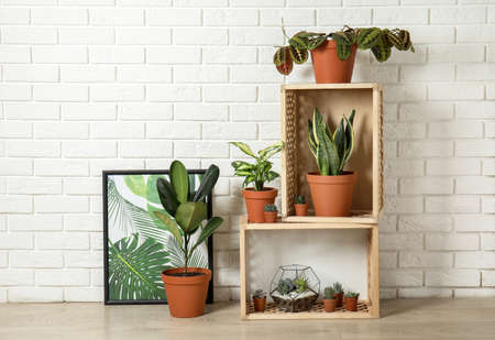 Potted home plants and wooden crates on floor indoors. Idea for interior decor