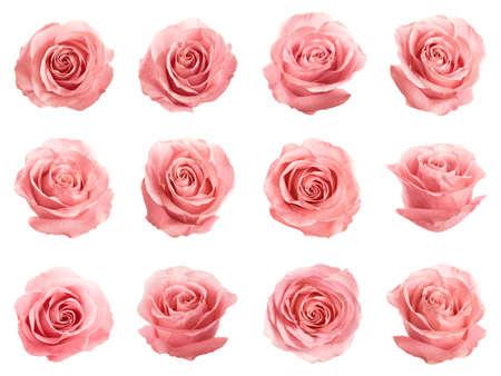 Satz schöne zarte rosa Rosen auf weißem Hintergrund