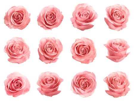 Set of beautiful tender pink roses on white background