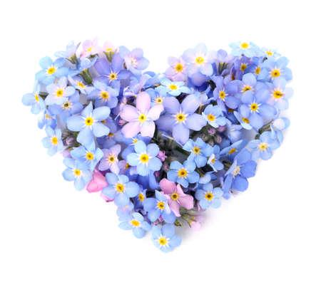 Cuore fatto di incredibili fiori primaverili del nontiscordardime su sfondo bianco, vista dall'alto