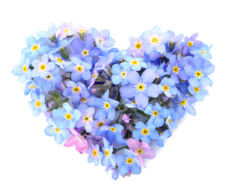 Heart made of amazing spring forget-me-not flowers on white background, top view Reklamní fotografie