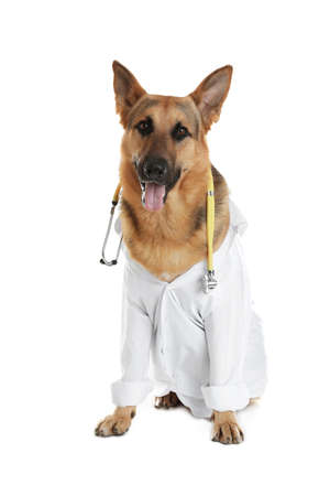 Cute dog in uniform with stethoscope as veterinarian on white background